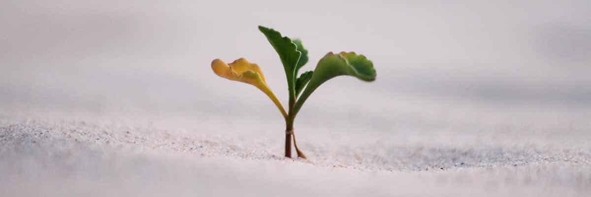 ich will leben und wachsen